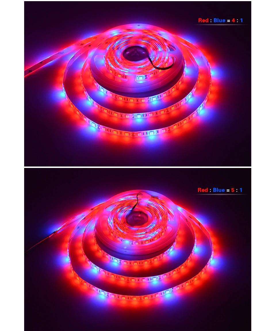 LED_Grow_Lights_5050_12V_LED_Strip_2