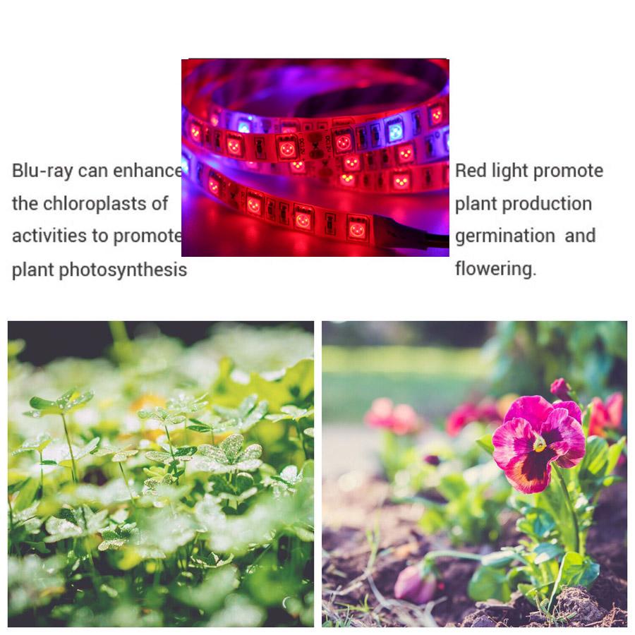 LED_Strip_16.4Ft_5M_300LEDs_LED_GROW_LIGHTS_9